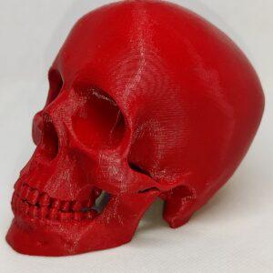 Craniu Decorativ